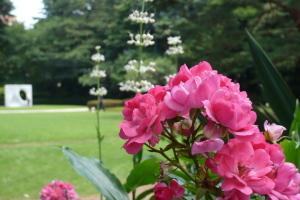 東京都庭園美術館芝生の庭