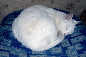 七里川温泉の猫