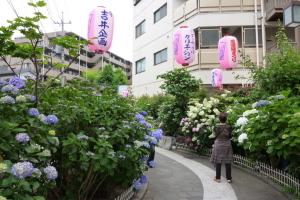 堀切の紫陽花道
