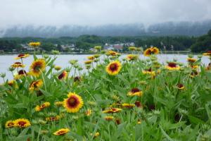 河口湖大石公園