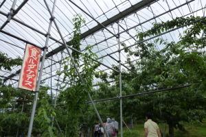 上山、川口観光果樹園