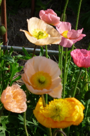 潮騒王国の花畑