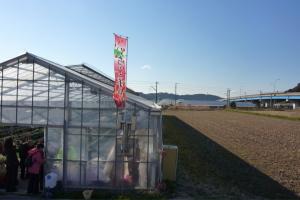 富浦の苺狩り